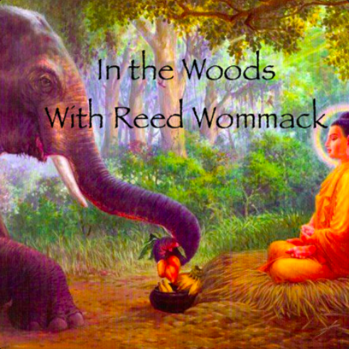 #154 In the Woods With Reed Wommack